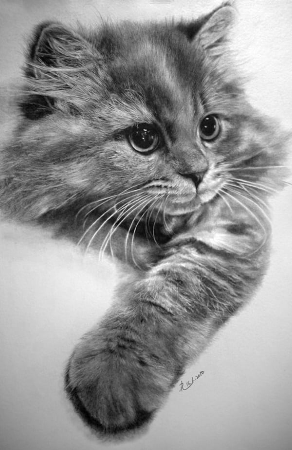 40 Great Examples of Cute and Majestic Cat Drawings 20