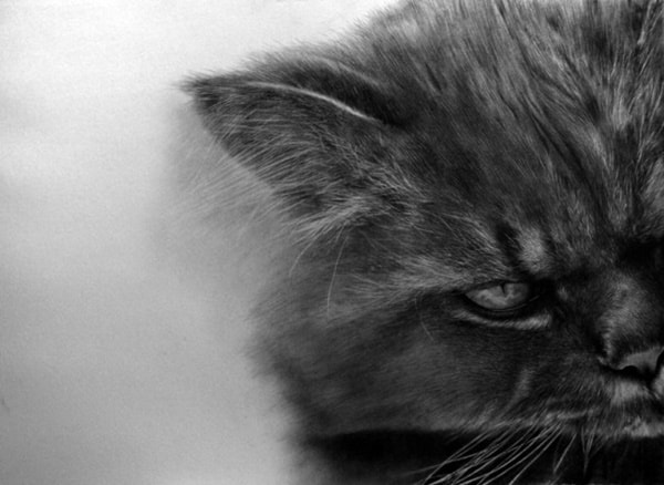 40 Great Examples of Cute and Majestic Cat Drawings 25