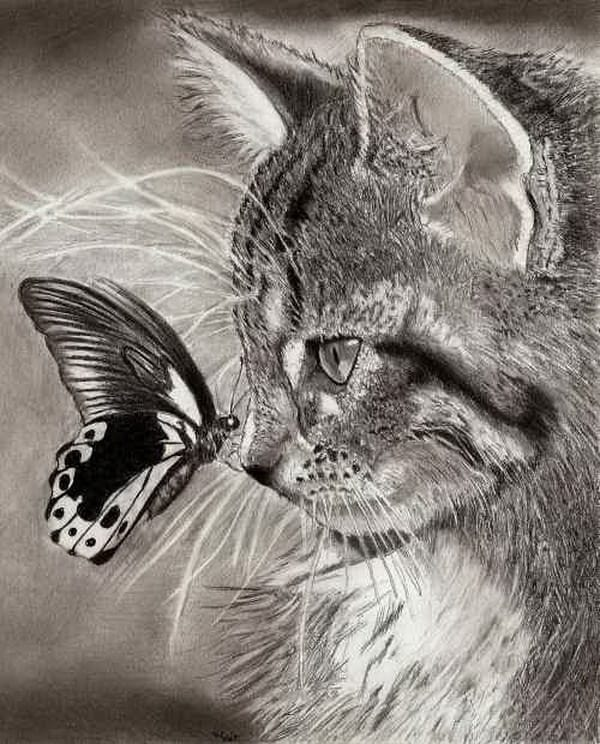 40 Great Examples of Cute and Majestic Cat Drawings 9