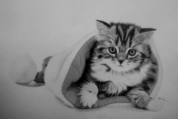 40 Great Examples of Cute and Majestic Cat Drawings Feature Image