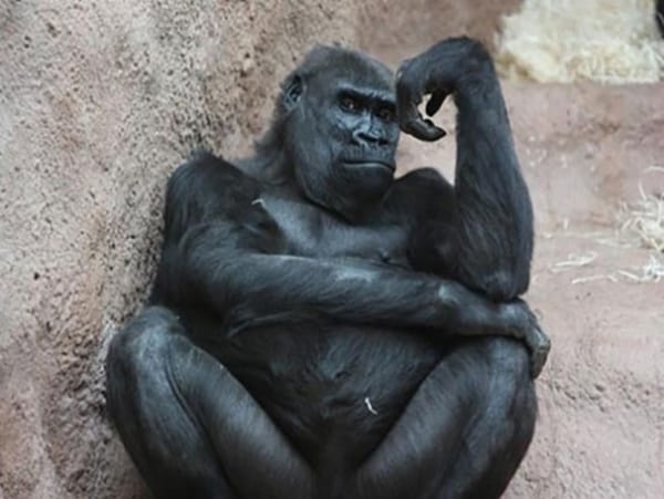 40 Pictures Of Animals in Deep Thought 16