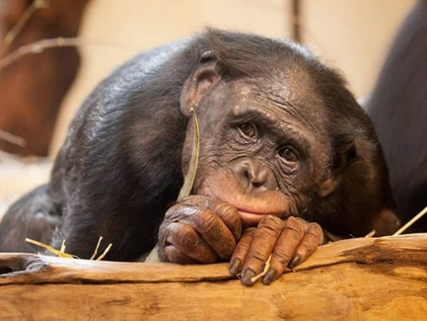 40 Pictures Of Animals in Deep Thought 20