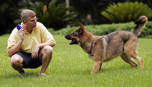Effects of Training in Dog's Brain 1