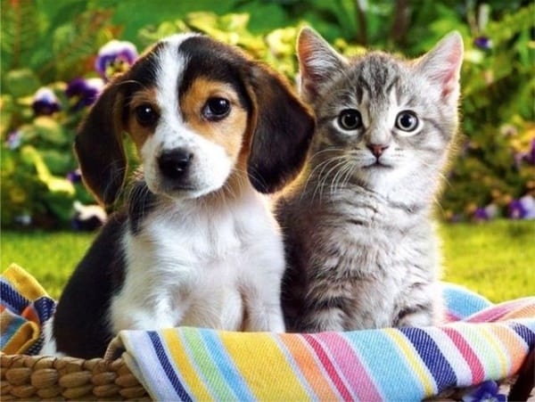 20-interesting-differences-between-cats-and-dogs-2