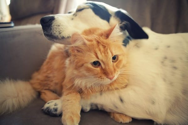 20-interesting-differences-between-cats-and-dogs-3