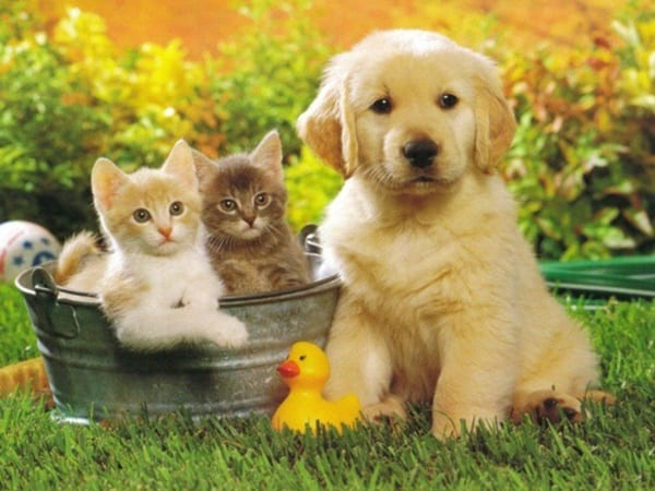 20-interesting-differences-between-cats-and-dogs-4