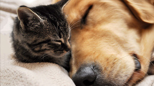 20-interesting-differences-between-cats-and-dogs-7