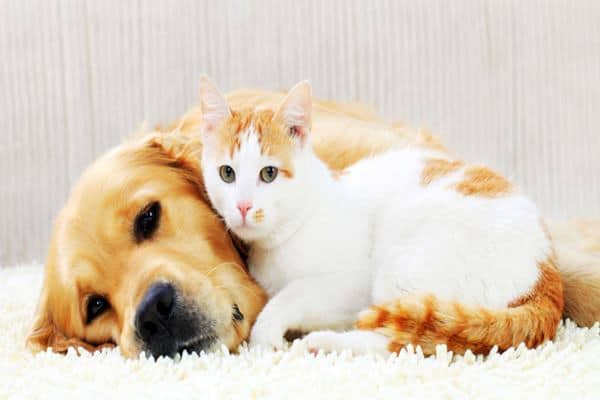 20-interesting-differences-between-cats-and-dogs-feature-image