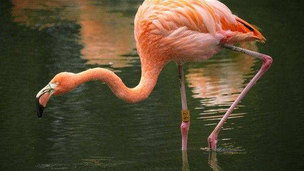 40-beautiful-pictures-of-pink-flamingo-birds-11