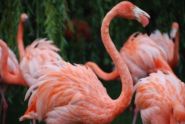 40-beautiful-pictures-of-pink-flamingo-birds-18