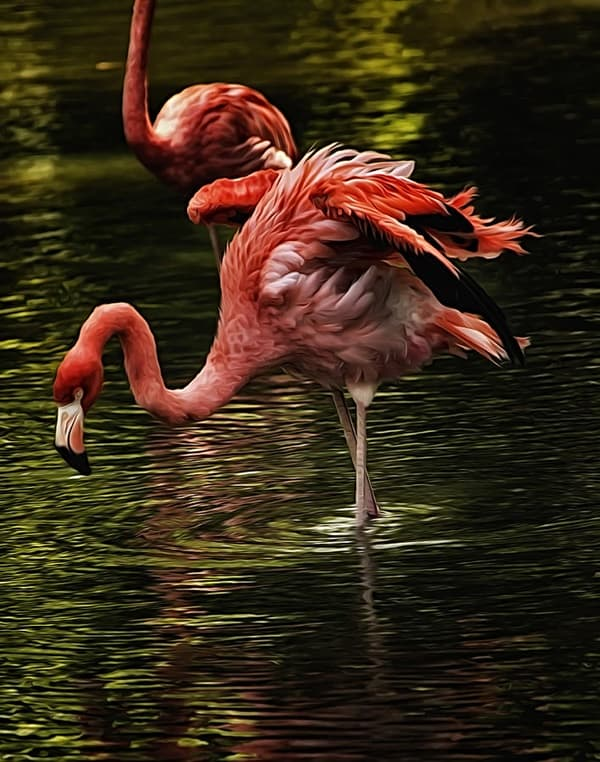 40-beautiful-pictures-of-pink-flamingo-birds-30