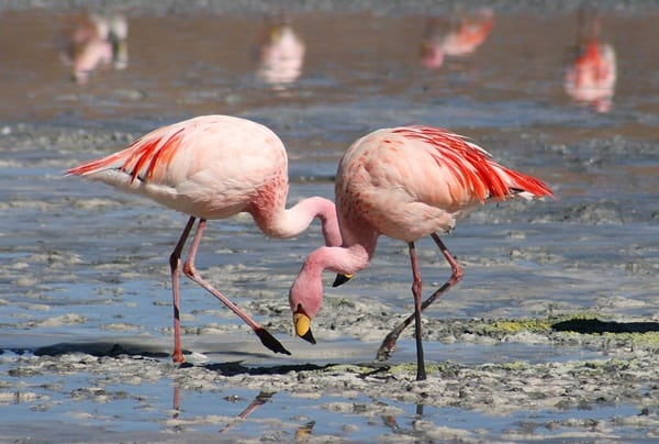 40-beautiful-pictures-of-pink-flamingo-birds-33