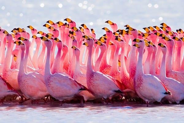 40-beautiful-pictures-of-pink-flamingo-birds-4