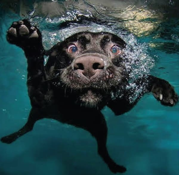 40-pictures-of-animals-chilling-in-pools-23