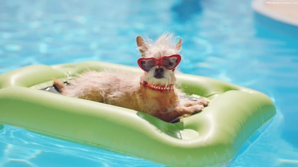 40-pictures-of-animals-chilling-in-pools-26