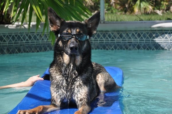 40-pictures-of-animals-chilling-in-pools-37