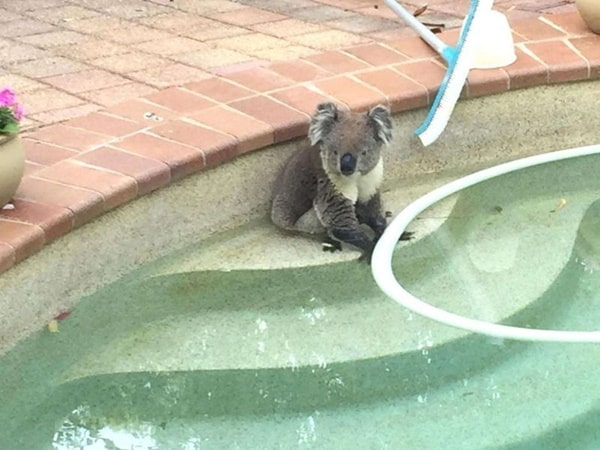 40-pictures-of-animals-chilling-in-pools-8