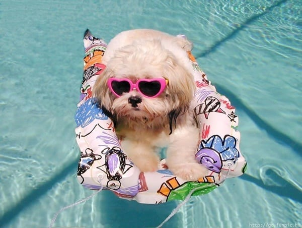40-pictures-of-animals-chilling-in-pools-9