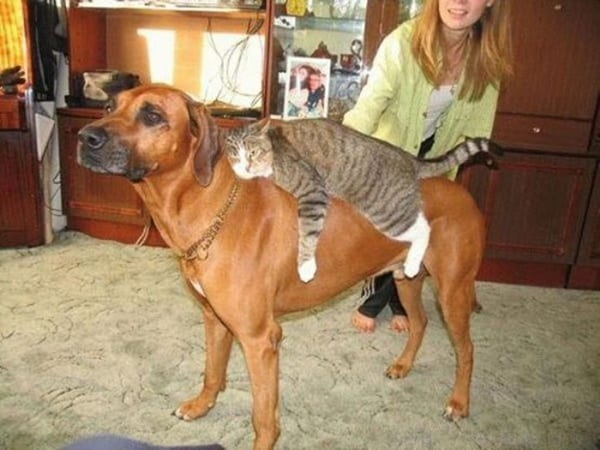 40-pictures-of-cats-on-tops-of-dogs-22