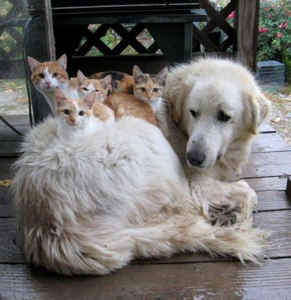 40-pictures-of-cats-on-tops-of-dogs-25