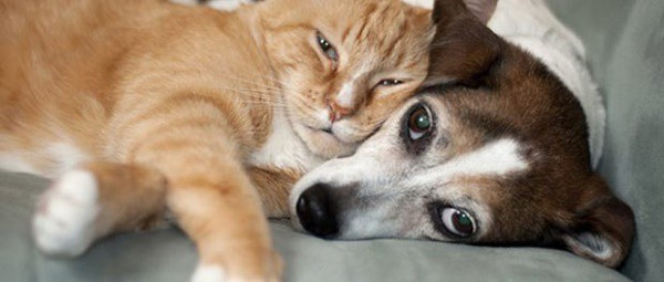 40-pictures-of-cats-on-tops-of-dogs-34