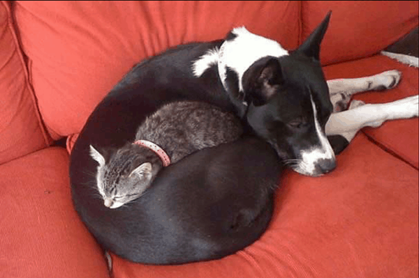 40-pictures-of-cats-on-tops-of-dogs-36