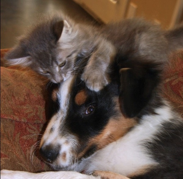 40-pictures-of-cats-on-tops-of-dogs-9