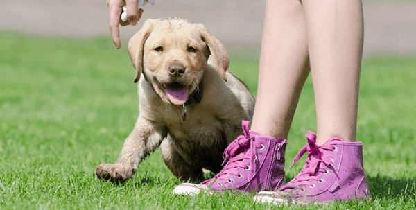 guidelines-of-how-to-raise-a-perfect-dog-3