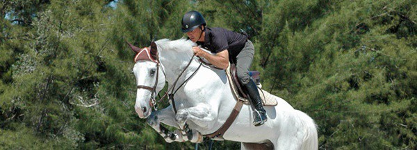 how-to-train-your-horse-to-jump-5