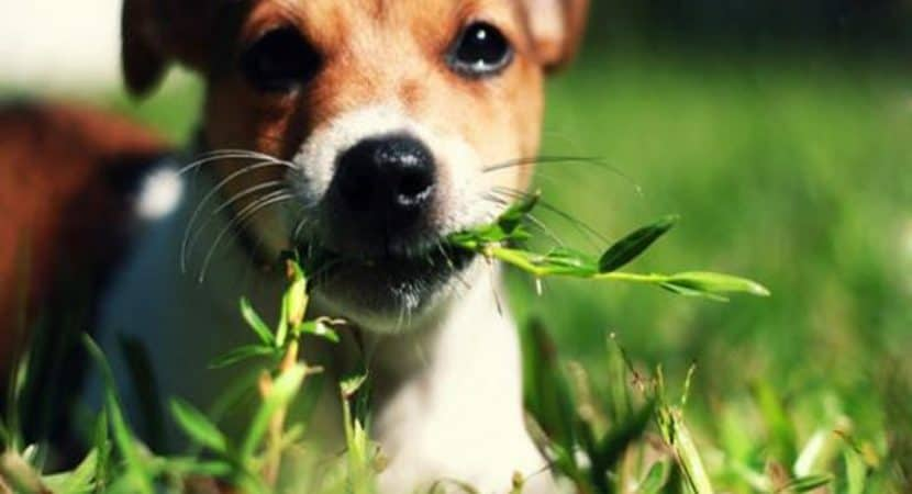 how to stop your dog eating plants