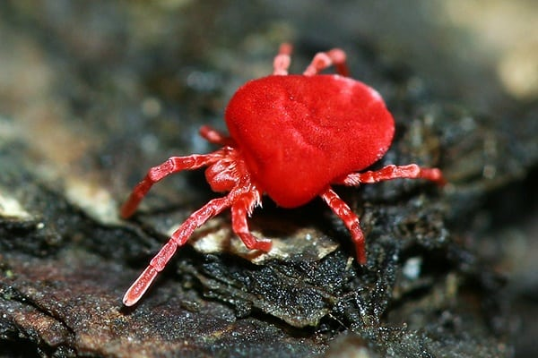 20-beautiful-red-colored-animals-in-the-world-14