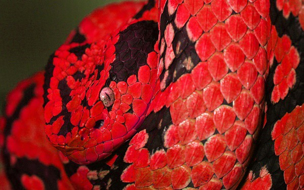 20-beautiful-red-colored-animals-in-the-world-8