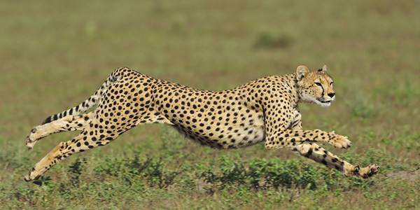 20-fastest-animals-in-the-world-13
