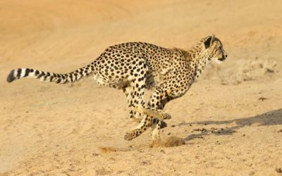 20-fastest-animals-in-the-world-feature-image