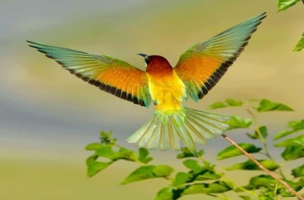 40-fantastic-pictures-of-flying-birds-1