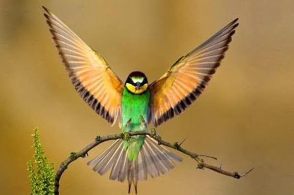 40-fantastic-pictures-of-flying-birds-10
