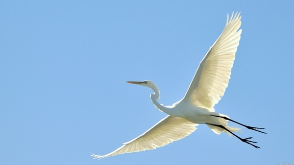 40-fantastic-pictures-of-flying-birds-11