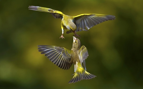 40-fantastic-pictures-of-flying-birds-12