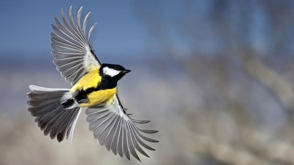 40-fantastic-pictures-of-flying-birds-13