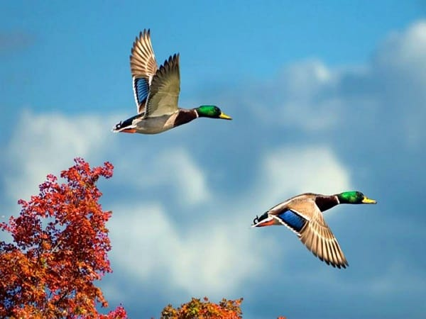 40-fantastic-pictures-of-flying-birds-17