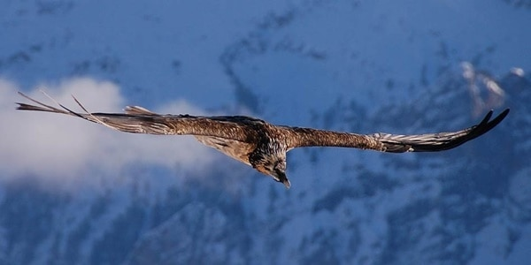 40-fantastic-pictures-of-flying-birds-18