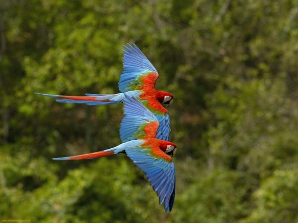 40-fantastic-pictures-of-flying-birds-2