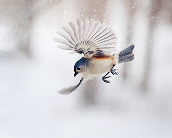 40-fantastic-pictures-of-flying-birds-20