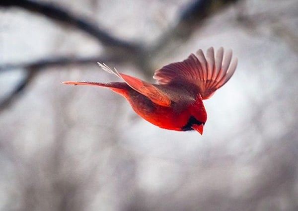 40-fantastic-pictures-of-flying-birds-21