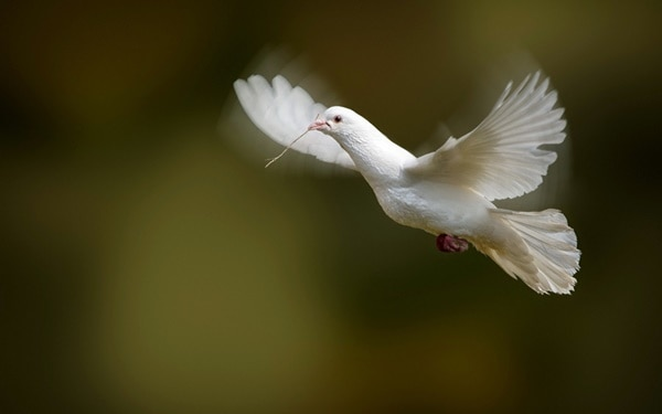 40-fantastic-pictures-of-flying-birds-22