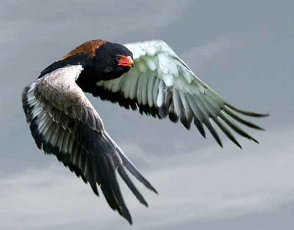 40-fantastic-pictures-of-flying-birds-23