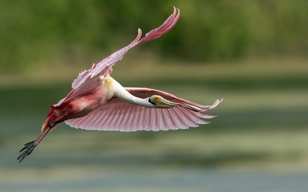 40-fantastic-pictures-of-flying-birds-27