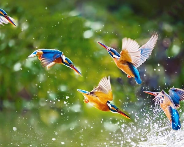 40-fantastic-pictures-of-flying-birds-3