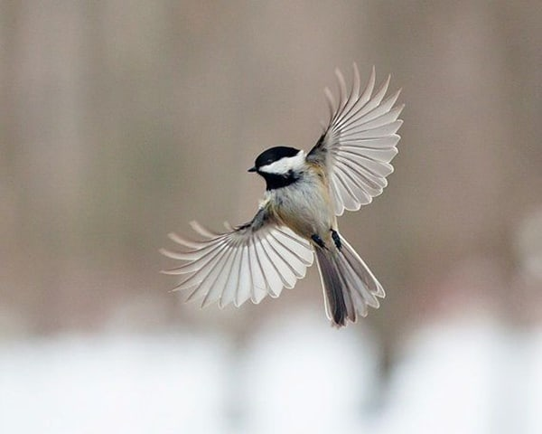 40-fantastic-pictures-of-flying-birds-30