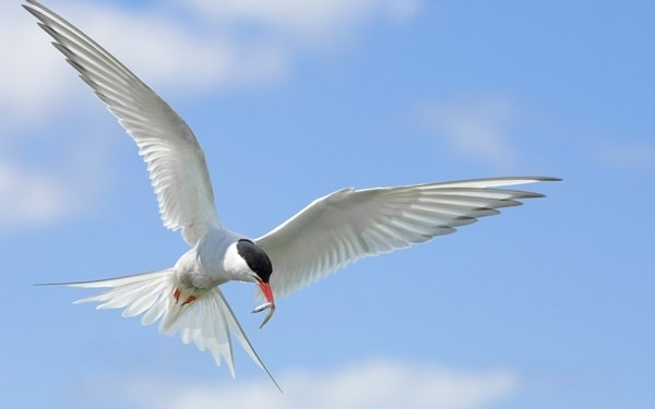40-fantastic-pictures-of-flying-birds-31